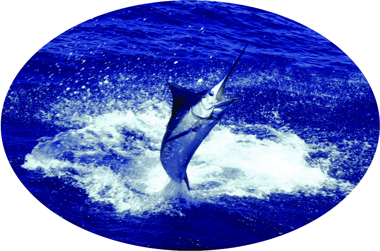 Fishing Hawaii Style, Jumping Marlin