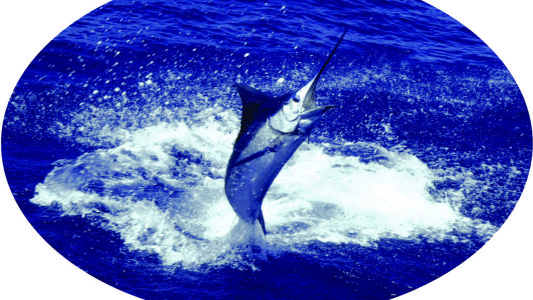 Fishing Hawaii Style, Cover image, jumping marlin by Jim Rizzuto