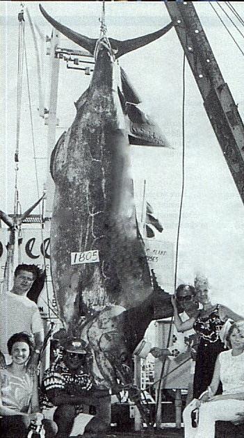 Scrambled Spring Fishing in Kona