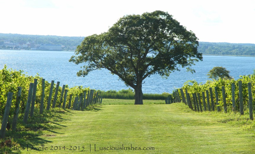 Seneca Lake Wine Tour Map