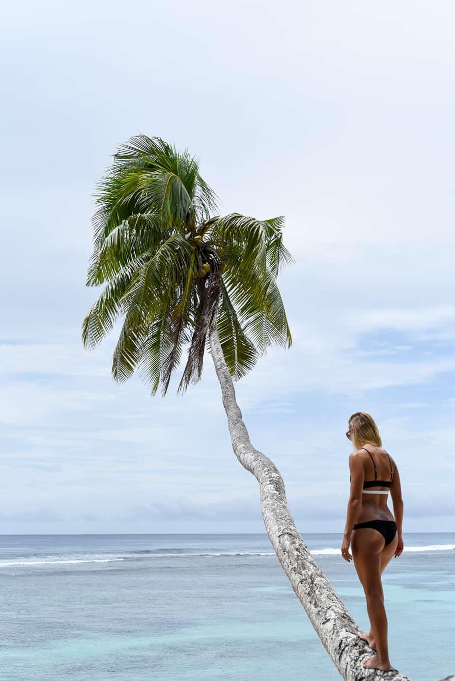 samoa travel blog lush palm