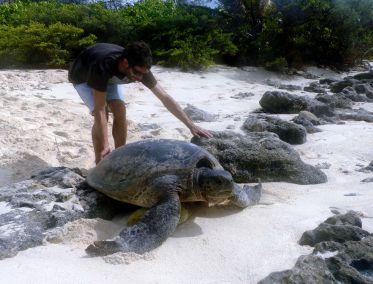 Pep avec une tortue femelle verte