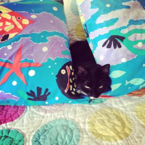 Even when Wombat isn't hiding, she is. Hiding