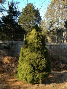 See that fence behind the formerly-tiny tree from the 80s? It's about 6 ft. high