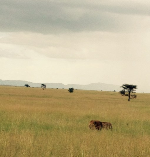 The Master of All He Surveys. At least on the Serengeti