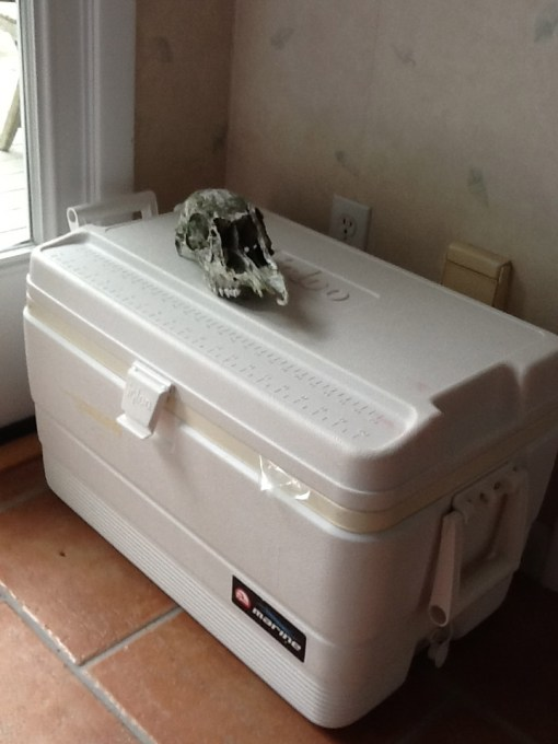 Actual cooler of provisions brought by a guest for her own consumption. Deer skull added by me, for scale
