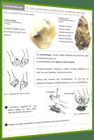 préhistoire dossier 3