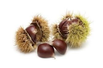 Freshly harvested chestnuts