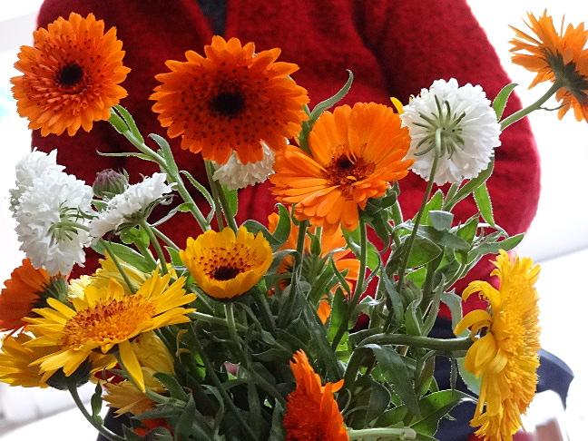 flowers_3_Nov_2013