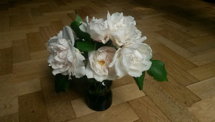 Roses for 5th June 2016