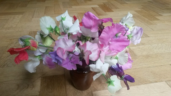 Flowers for 7th August 2016 (sweet peas)