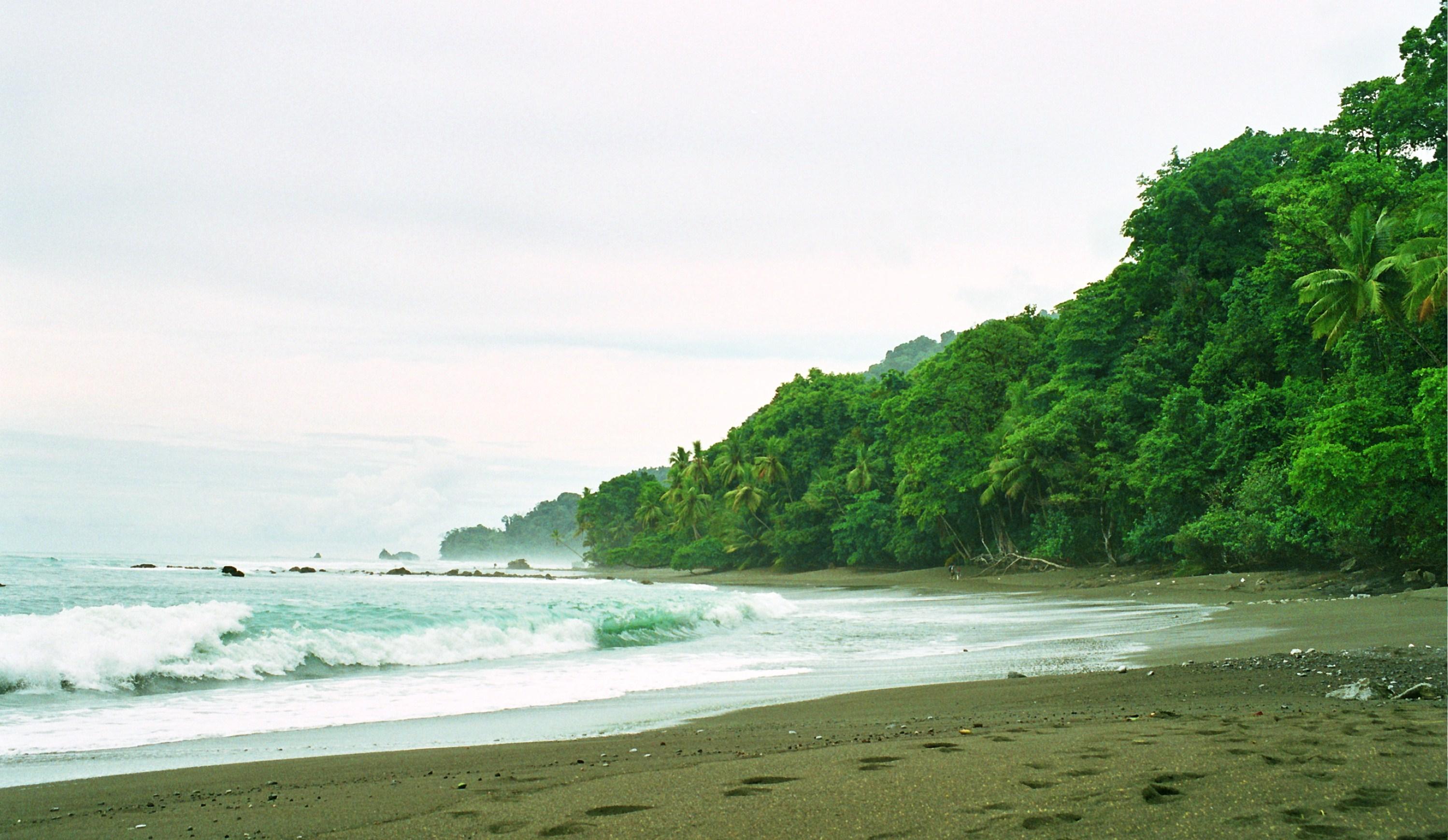 pláž a prales