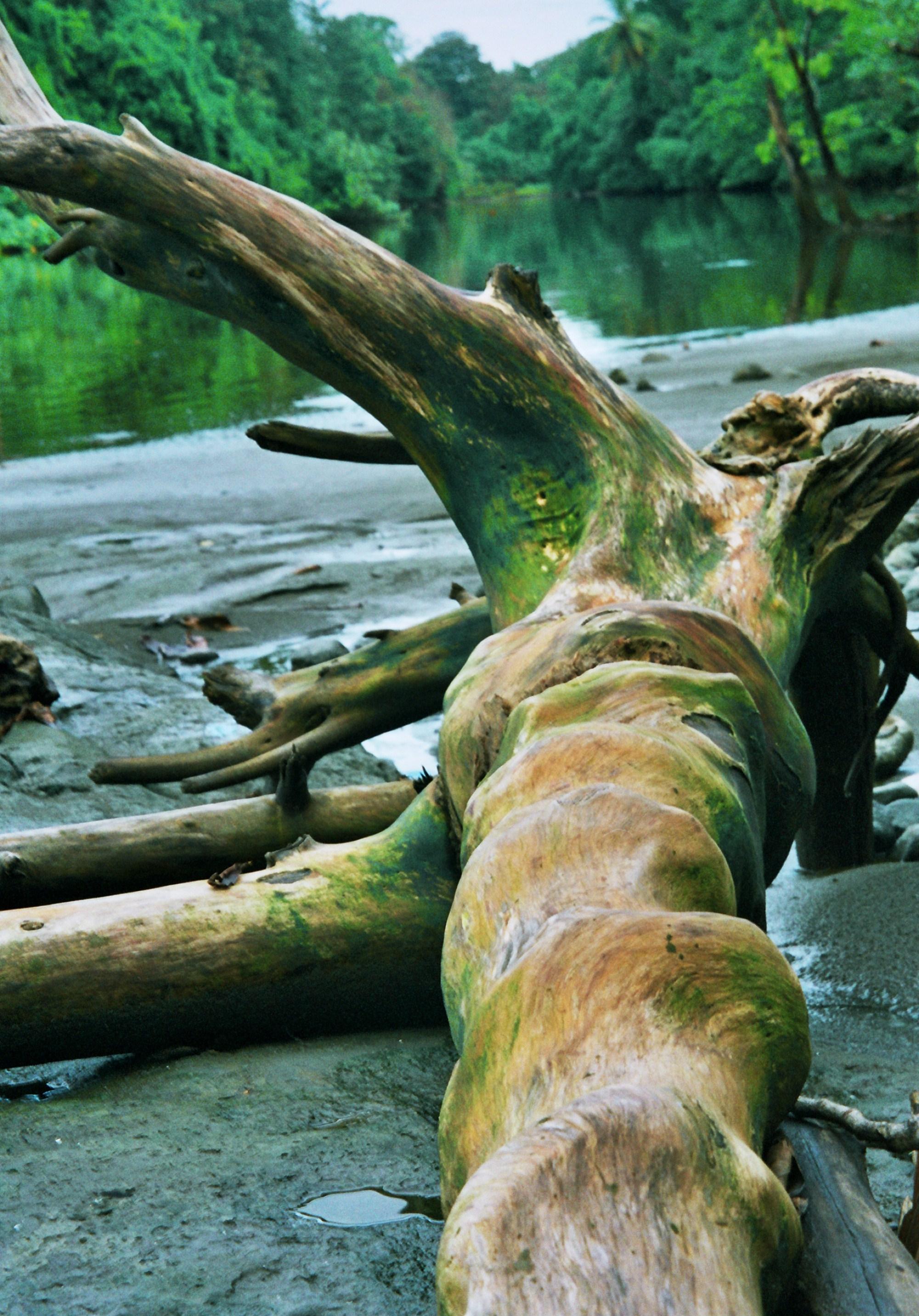 strom na břehu řeky