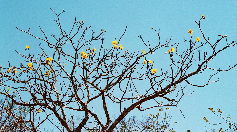 kvetoucí suchý prales