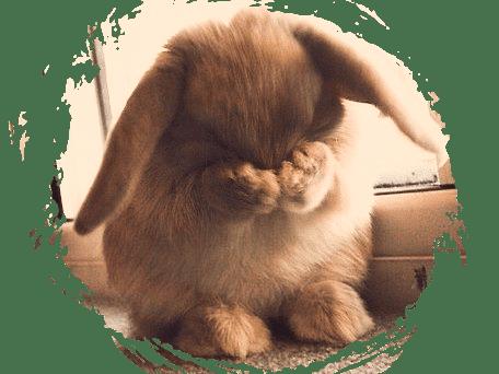 embarrased bunny