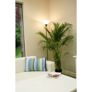 Delray Plants Cat Palm in 10″ Pot $10.79 Free Store PickUp!