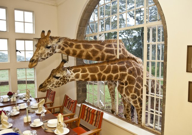 giraffemanor-luxafrique