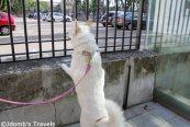 Jdombs-Travels-Avignon-1