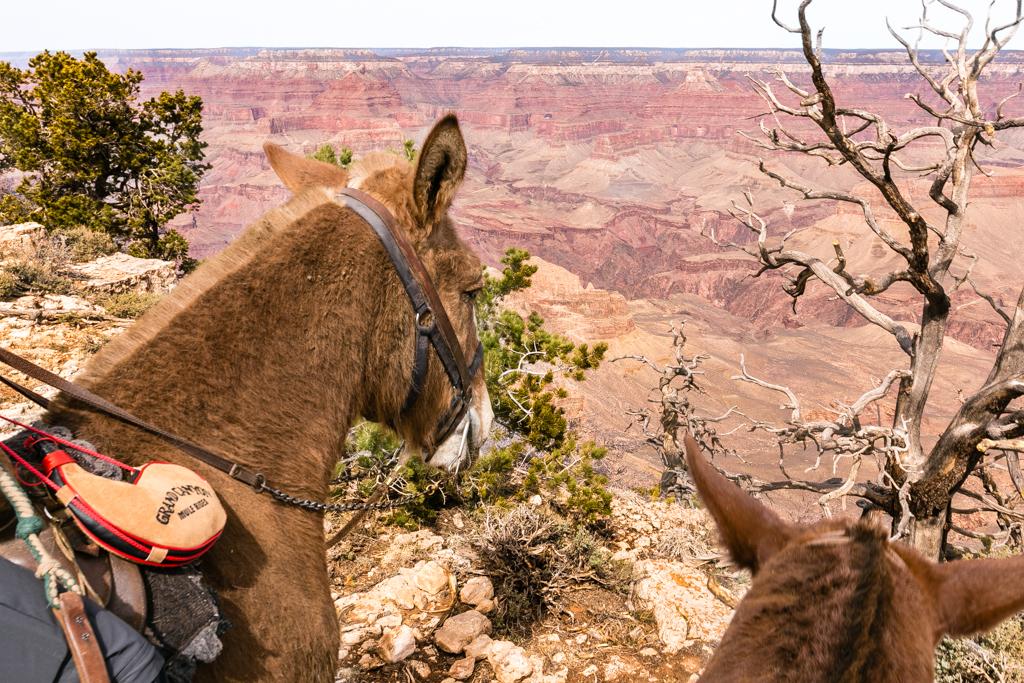 Mule Rim Ride Views
