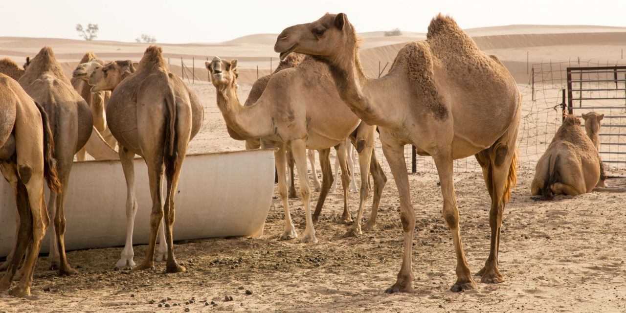 A Desert Safari And Other Adventures In Abu Dhabi