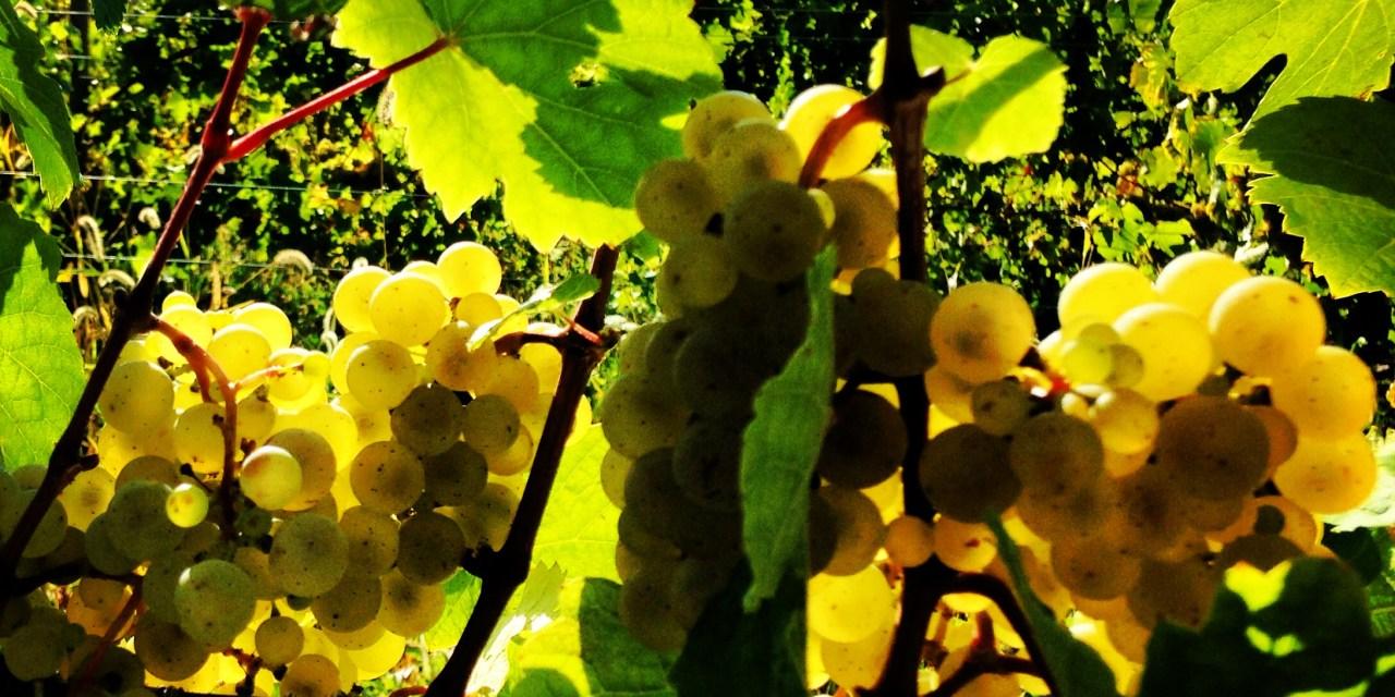 A Tour North Up The Seneca Lake Wine Trail
