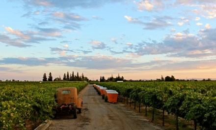 "In California, The Best of ""America's Grape"""
