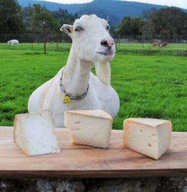 Mendocino Goat