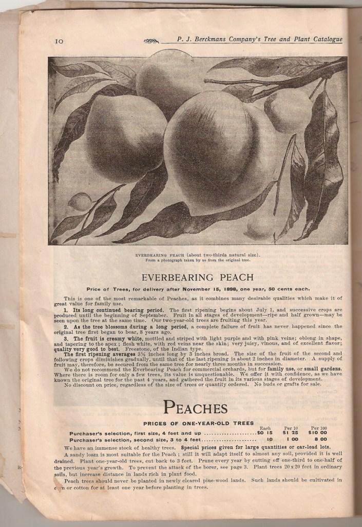 Berckmans Catalog