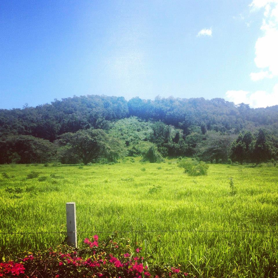Nowadays, Jamaica is characterized by lush countryside. (Photography Jenna Intersimone)