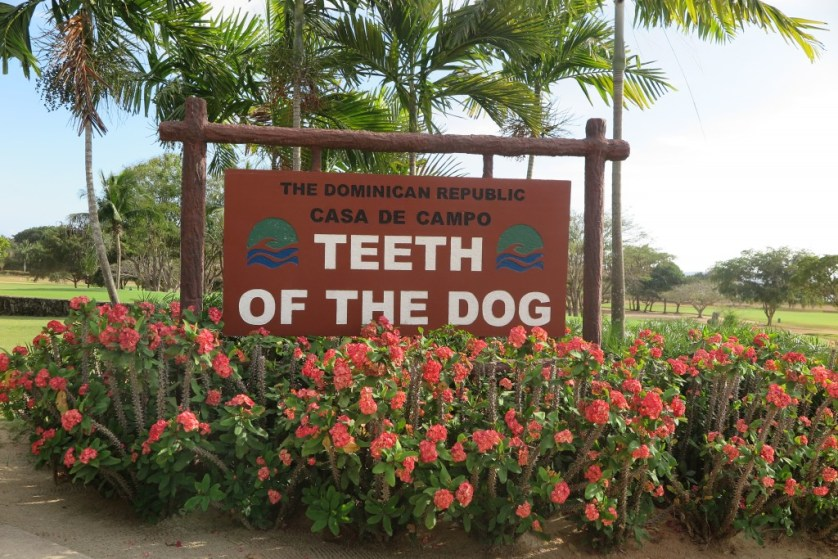 teeth of the dog