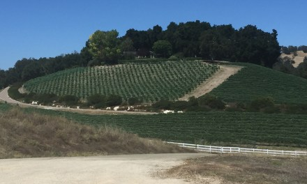 Elegant Weekend Jaunt in Paso Robles