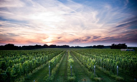 Long Island Wine: New York's Big Grape