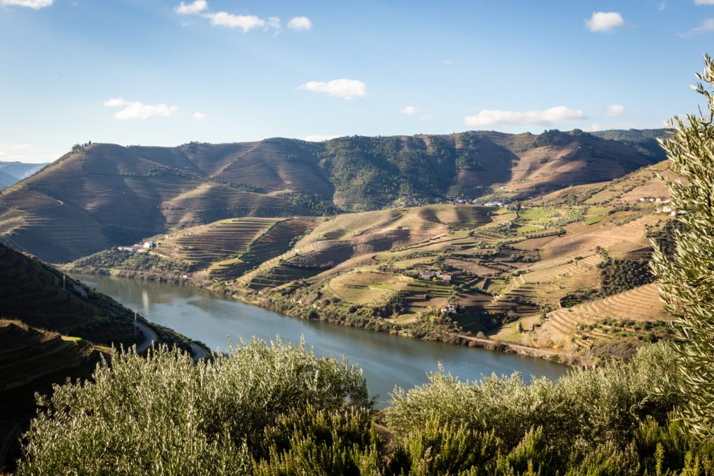Fields of gold line the Douro River Valley.