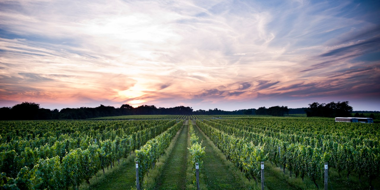Long Island Wine: New York's Big Grape