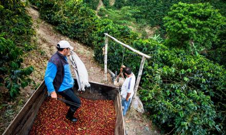 Coffee Tourism in El Salvador Jolts Interest of Worldly Travelers