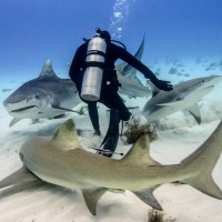 A Fish Called Emma: Bahamas Tiger Shark Diving