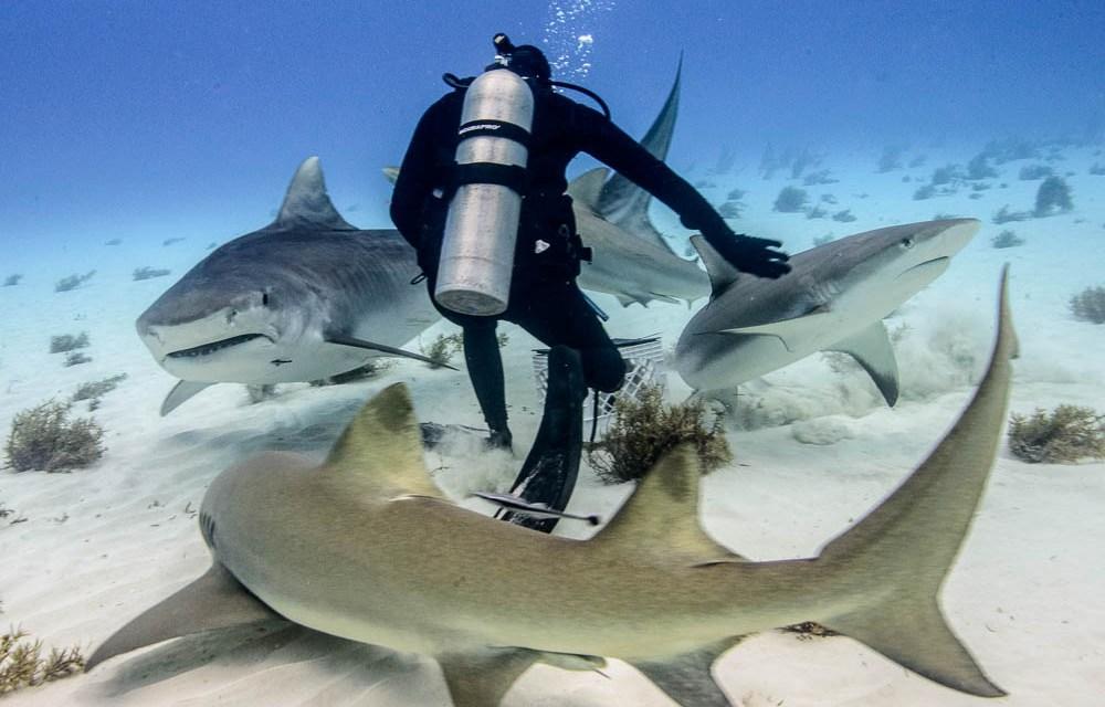 A Fish Called Emma: Bahamas Tiger Shark Diving