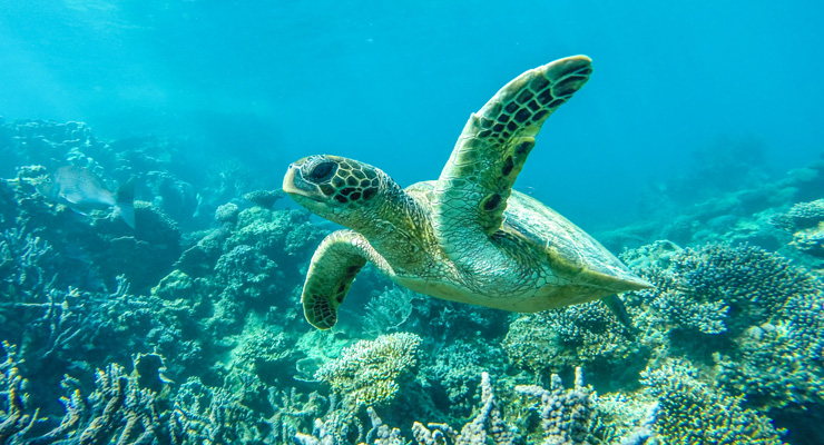 GregSnell---Coral-Bay-Snorkelling_feature