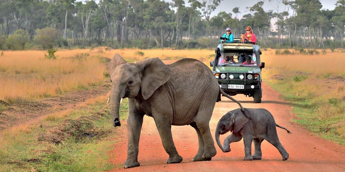 Luxury Tent Camp Photo Safari of East Africa