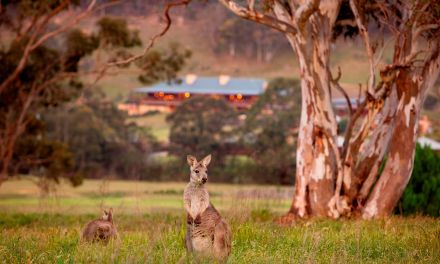 5 Unmissable Luxury Escapes in Australia