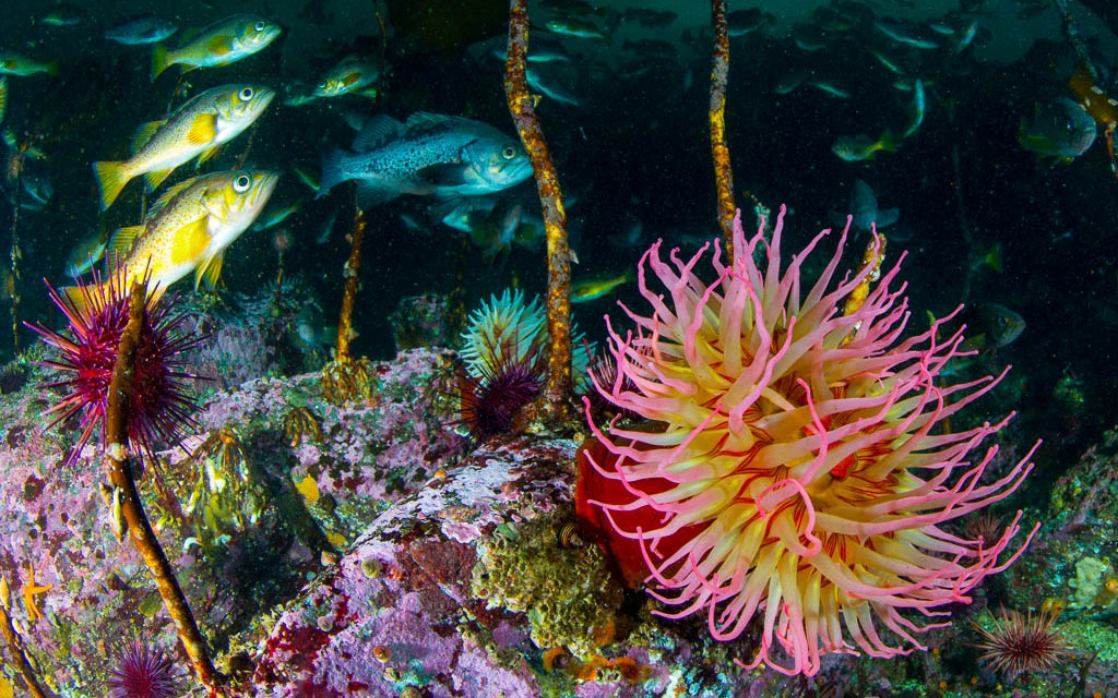 Raptures of the Deep: Beneath British Columbia's Emerald Sea
