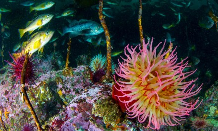 Raptures of the Deep: Beneath British Columbia's Emerald Sea