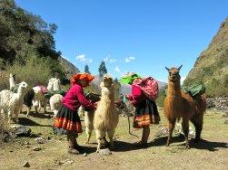 libertador_trekking-with-llamas_4