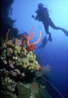 LuxeGetaways Magazine   Courtesy Caribbean Travel Association   St Kitts Snorkel