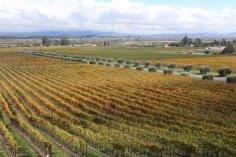 LuxeGetaways - Luxury Travel - Luxury Travel Magazine - Luxe Getaways - Luxury Lifestyle - Napa Valley Wine Experiences - Napa California