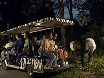 LuxeGetaways - Luxury Travel - Luxury Travel Magazine - Katie Dillon - LaJolla Mom - Family Travel - Singapore - Night Safari Tram Tour