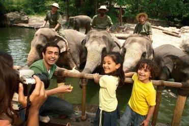singapore-zoo-elephants