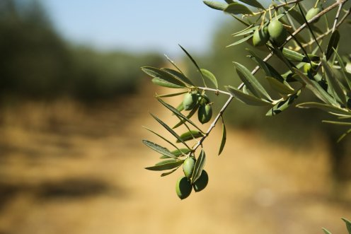 LuxeGetaways - Luxury Travel - Luxury Travel Magazine - Romantic Travel Getaways - Greece - Olive Tree