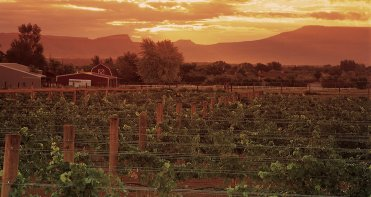 LuxeGetaways - Luxury Travel - Luxury Travel Magazine - Luxe Getaways - Luxury Lifestyle - Colorado Wine Harvest - Winery - Colorado Wine Festivals - Vineyards