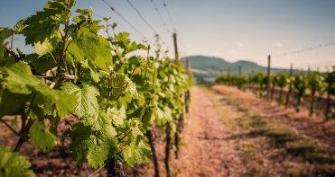 LuxeGetaways - Luxury Travel - Luxury Travel Magazine - Luxe Getaways - Luxury Lifestyle - Colorado Wine Harvest - Winery - Colorado Wine Festivals - Grapes